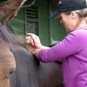 equine spinal therapy